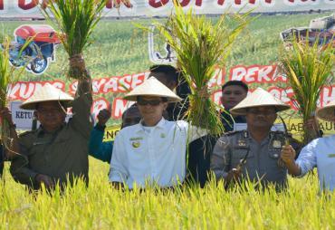 Panen Raya, Bupati Kaur Harapkan Produksi Padi Sawah Lokal…