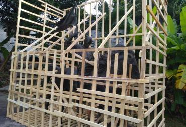 Pembangunan Monumen Fatmawati Sesuai Prosedur, Ini Kata…