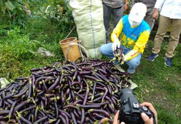 Bantu Produktivitas Petani, Gubernur Borong 6 Ton Hasil…