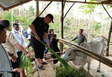 Tinjau Peternakan BUMP Desa Napal Jungur, Gubernur Rohidin…
